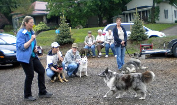 recall training by Anne MacDonald St. Thomas dog park