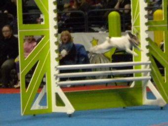 Superdogs Jack Russell