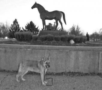 Jack at Man o' War's grave, Kentucky Horse Park, Lexington KY