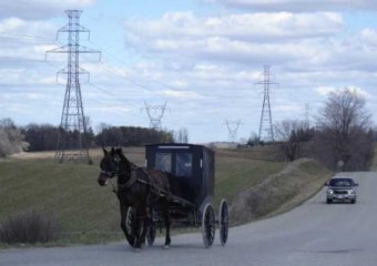 horse and buggy near Aylmer ON photo D Stewart