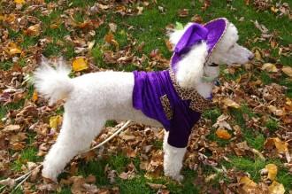 Dog Hallowe'en walkathon Leo 2010