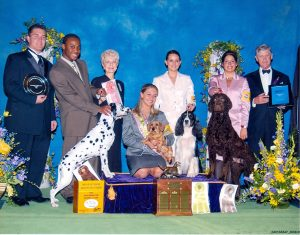 2004 Westminster dog show, junior category winners