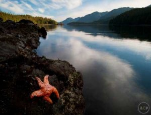 starfish on fjord shore, Jack Dykinga
