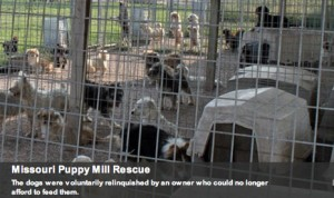 Missouri puppy mill rescue ASPCA