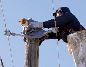 happy endings Yarmouth Crane operator lifting cat over top of hydro pole
