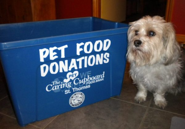 Charlie looking pathetic beside donation bin