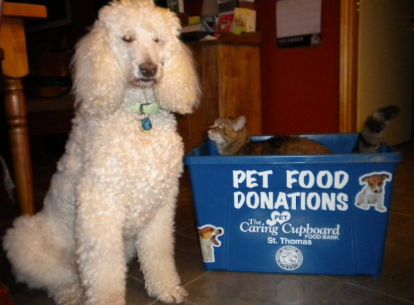 dog beside and cat in pet food bank bin - food for animals
