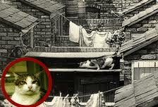 Frisky, the Coronation Street opening credits cat