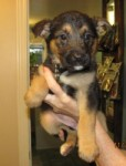 Holly, one of a litter of 7, at ABCRescue Dec. 2010
