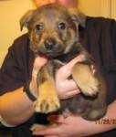 Donner, 1 of 7 pups rescued by ABCR Dec 2010