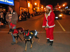 dogs in Santa Claus parade on Talbot Street