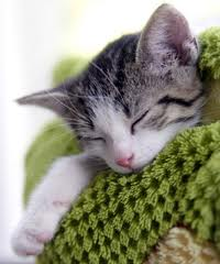 Kitten asleep on blanket
