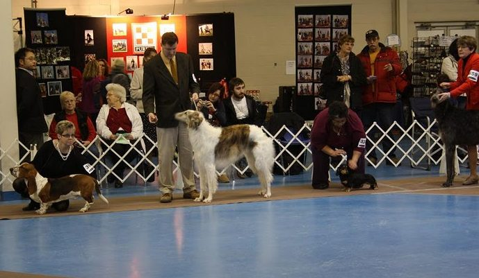dogs in ring
