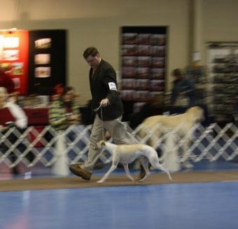 handler and dog in ring, London 2010