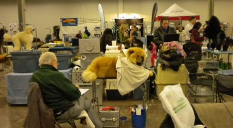 Dogs and people wait backstage at dog show