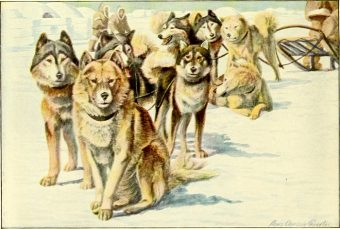 sled dogs The_book_of_dogs_1919_L-A-Fuertes-Natl-Geog-Soc-wikicommons
