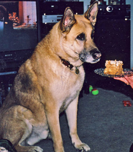 dog awaiting birthday cake