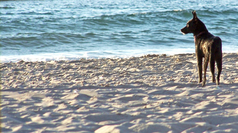 On_the_beach_wet_dog-wikicommons-crop