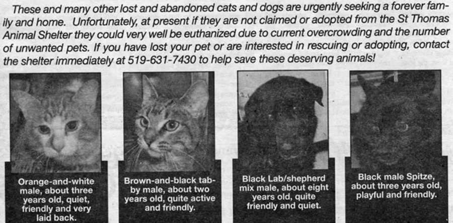 St. Thomas Times-Journal ad for animals at City Shelter, Apr 7/11 shelter manager