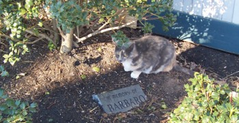 Cat at Barbaro memorial stone, Kentucky Horse Park 2007