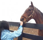 girl petting horse at Old Friends Thoroughbred Retirement Farm 2007