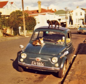 Fiat 500 with cats, Ponsonby, Auckland NZ
