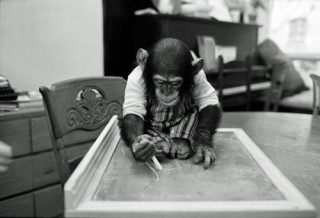 Nim Chimpsky, at home, drawing on chalkboard