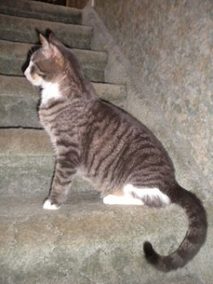 Wally on stairway