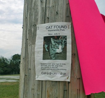 cat dumper - Poster for found cat