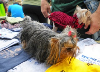 Yorkies trying on coats at STDOA booth