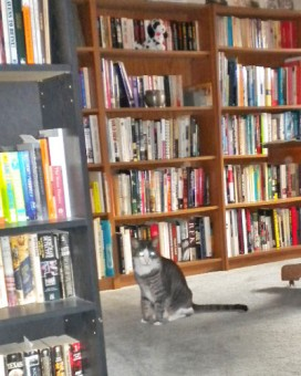 bookshelves with cat