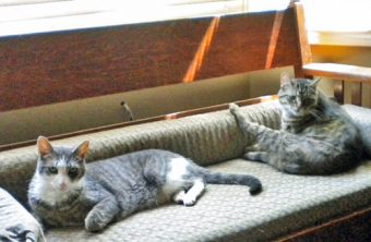 Cats lying on settee, peacefully - no diseases