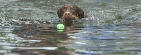 London Free Press photo by Sue Reeves, dog swimming