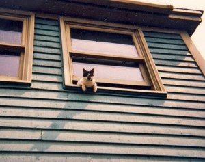 Elsie hanging out Outer Battery house window, St. John's 1998