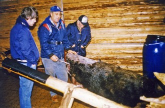 Larry Jeddore with moose in Glenwood tannery 1983
