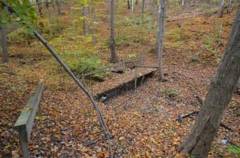 Dalewood bridge over stream, autumn leaves