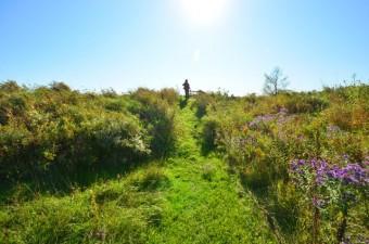 Fingal Wildlife area, path to pond