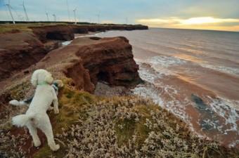 dogs at North Cape, wind turbines