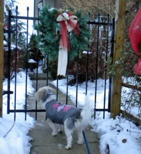 dog looking through decorated gate into yard D Stewart