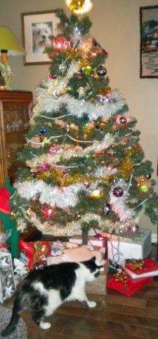 solstice Christmas tree with Elsie cat
