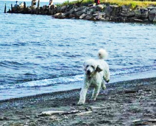 my dog runs at Clearville beach, Lake Erie