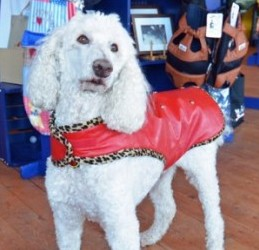 Red leather dog coat