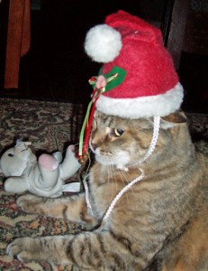 cat with Santa hat D Stewart