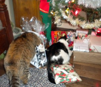 cats under Christmas tree
