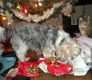 Charlie under tree opening presents