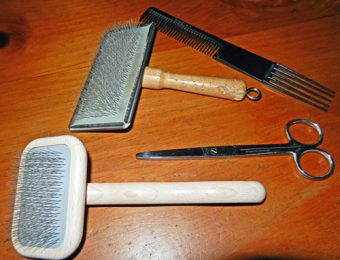 dog brushes, scissors and comb