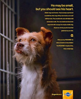 Pedigree shelter dog ad