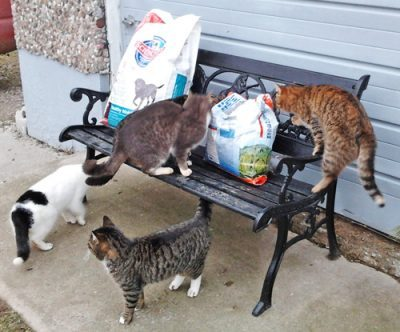 farm cats investigate dog and cat food delivery