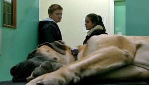 Schmeichel after biopsy with Ches and Katie in clinic