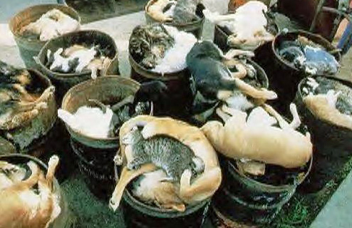 1 day body count of dog and cat corpses in 50 gal drums at pound